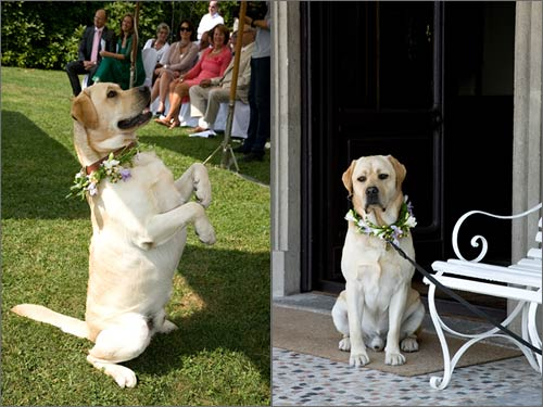 cane-invitato-matrimonio