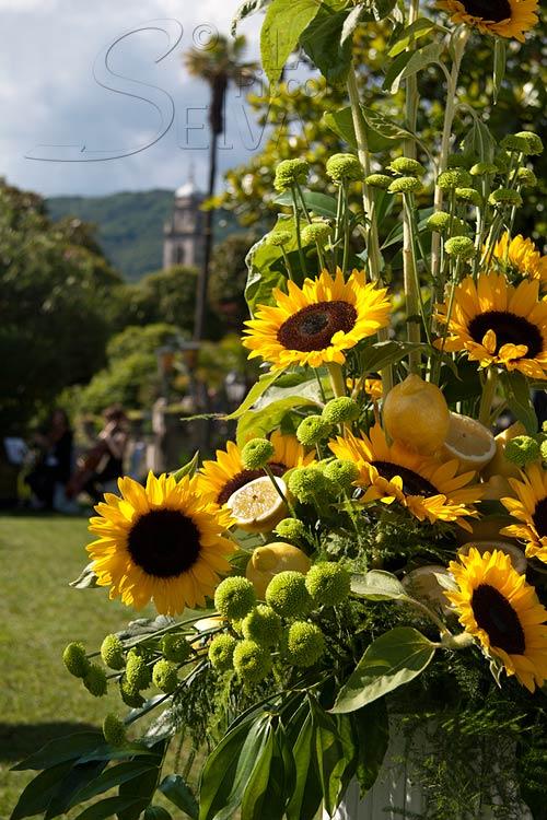 Girasoli Al Matrimonio : Matrimonio a tema giallo con girasoli e limoni