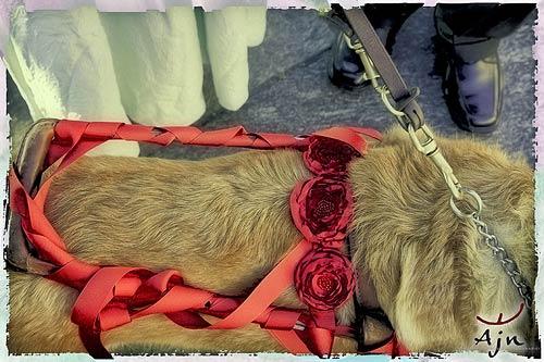 cane-guida-per-cechi